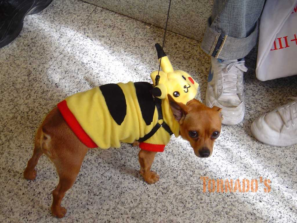 Dog Picachu